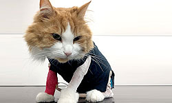 jaffas-bad-hair-day-jaffa-the-cat