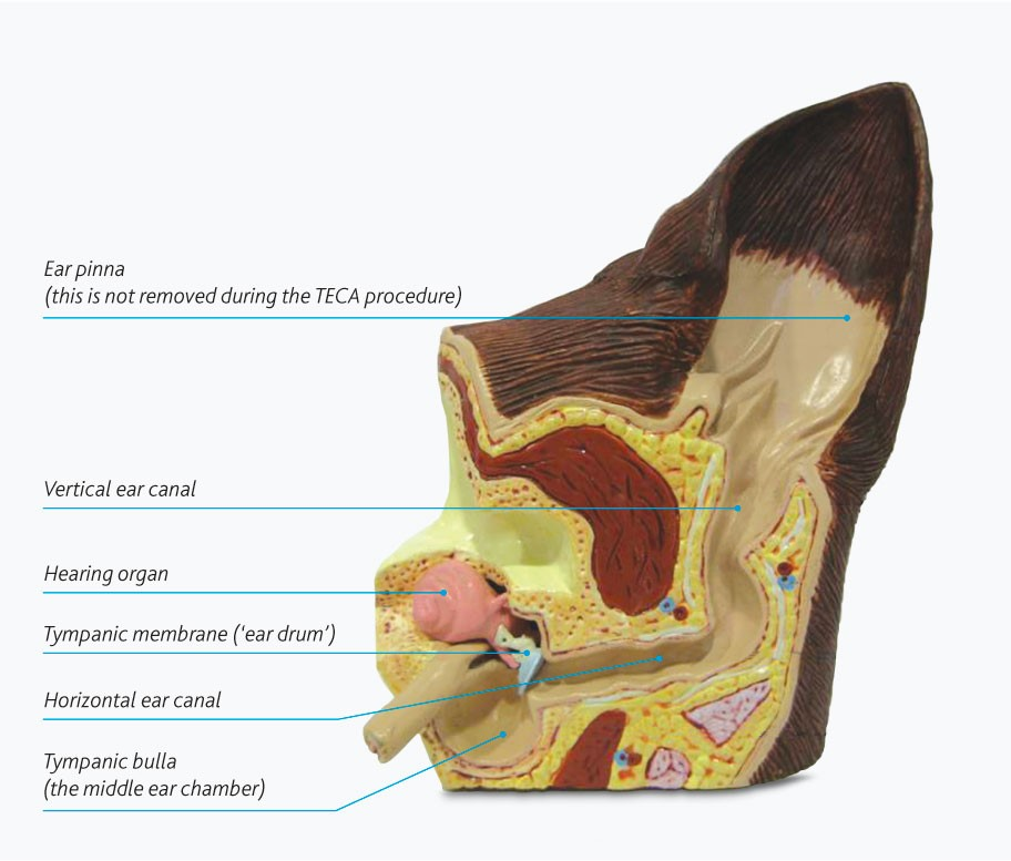 total-ear-canal-ablation-surgery-diagram